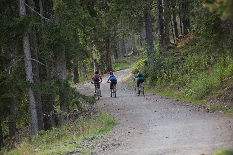 Mountain bike trail n°10 - Ball trap
