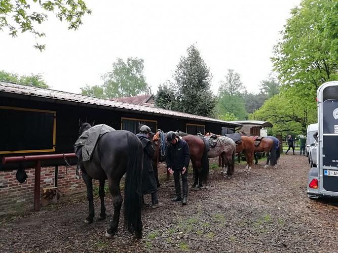 balade équestre bosland overpelt au départ du gîte de Heithoeve