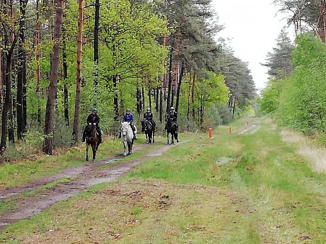 Balade équestre dans la région de Bocholt au départ de Pelt