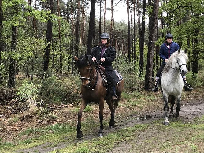 Balade équestre dans les bois du Bosland au départ du gîte équestre HEITHOEVE