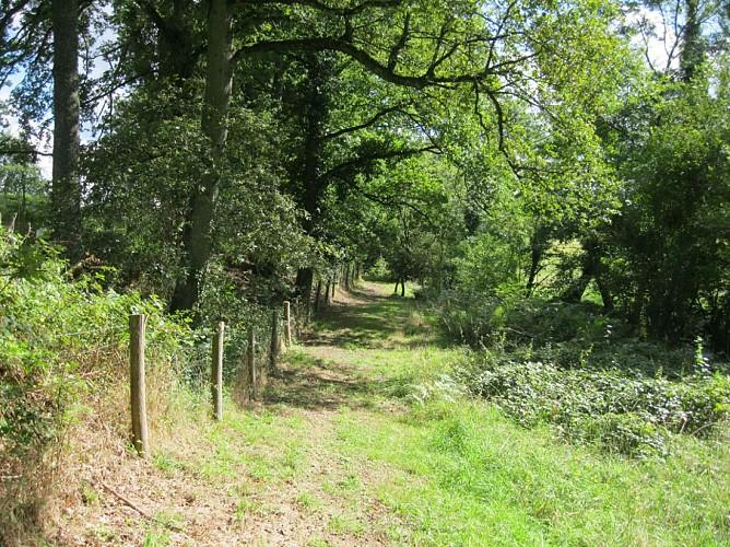 Liaison parc du Mas-Jambost - Bois des Vaseix
