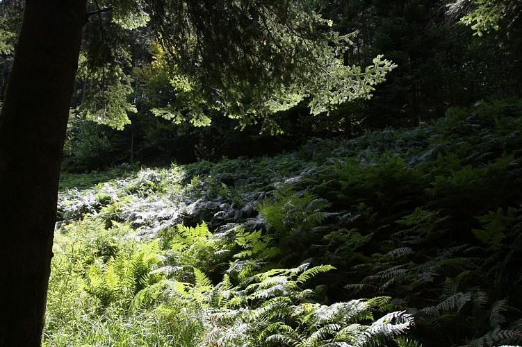 Circuit N°1 - Sentier  du Cimetière Gallo–Romain, proposé par Arbowal