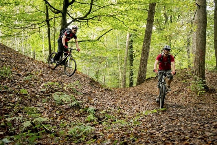 Circuit forestier de Beloeil