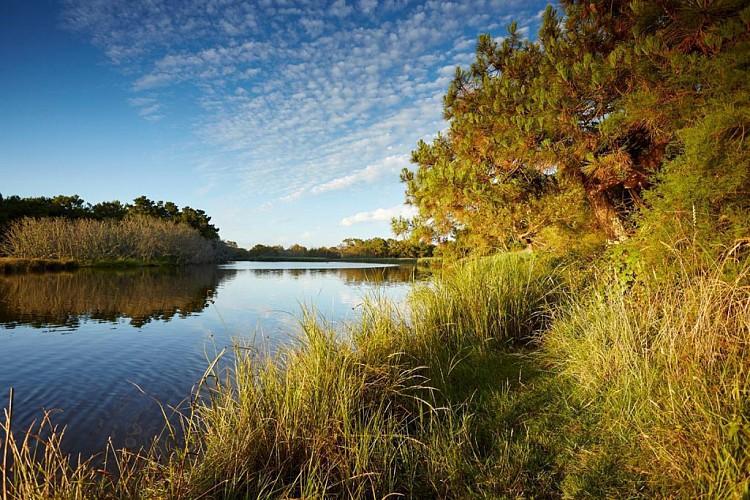Fouesnant : Autour du Marais de Mousterlin