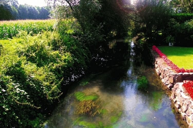 la forêt de gerstheim...