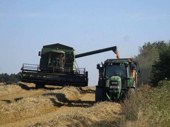 Villers-la-Ville: La plaine agricole de Tilly.