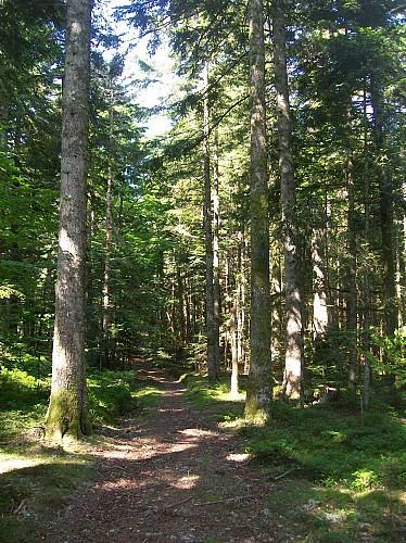 Église de La Guillermie