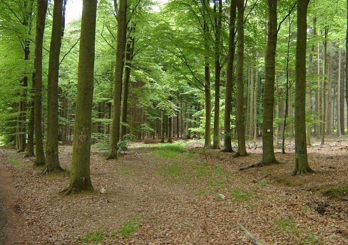 Waldspaziergang in Vielsalm