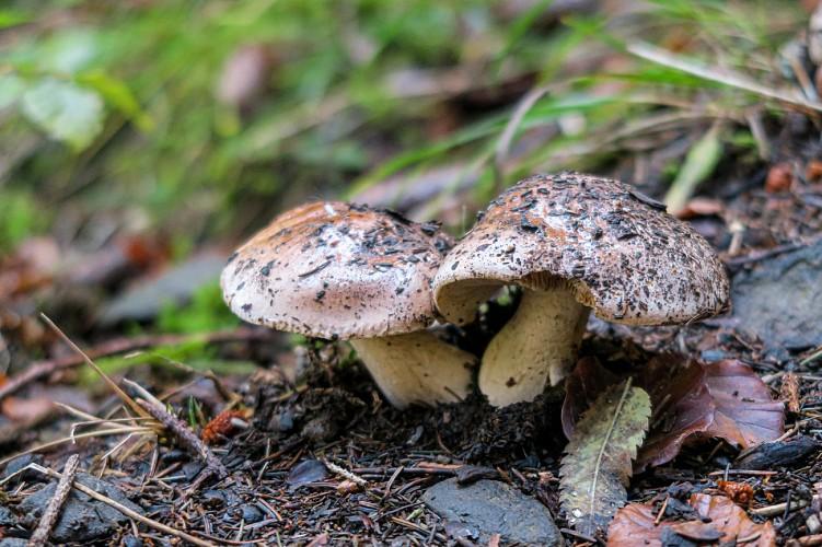 Parcours thématique : Sapicéa
