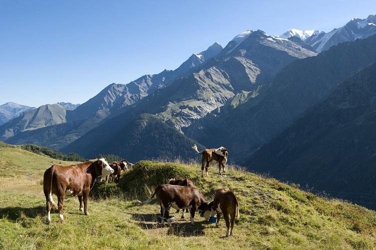 Hilke : Mont Joly Mountain Pass