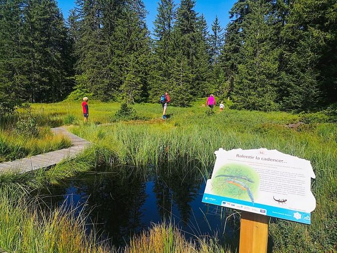 Arpelières trail on peatland fauna