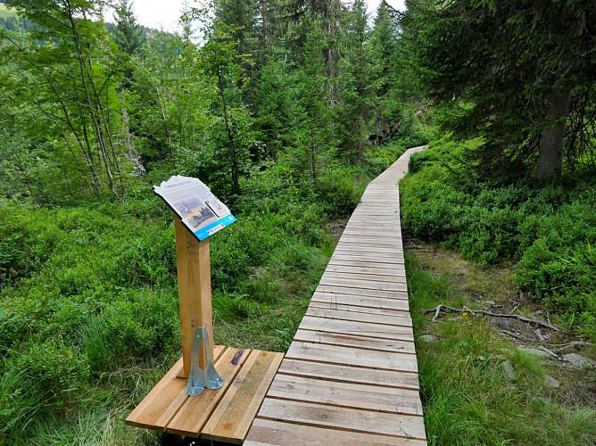 Sentier des Arpelières sur la faune des tourbières