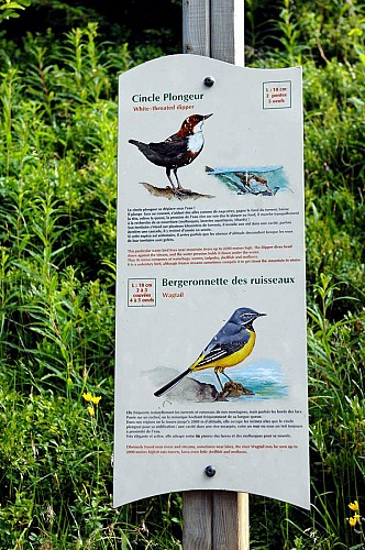 The bird trail