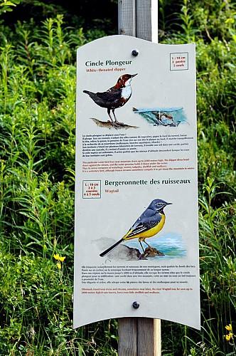 Sentier des oiseaux