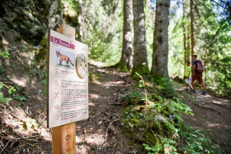 Pedestrian trail through the forest
