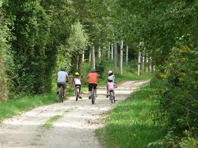 Mountain bike circuit through the poplar grove