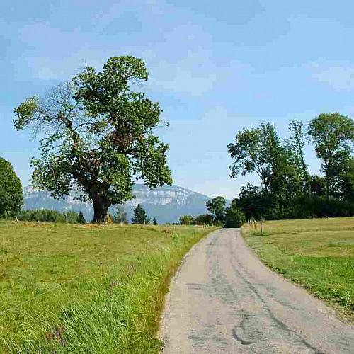 De la Crusille vers le lac d'Aiguebelette