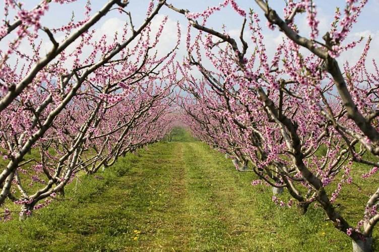 Promenade de printemps