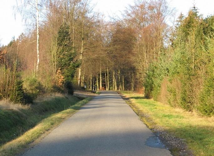 Fietsroute: kleine gehutjes & uitgestrekte bossen