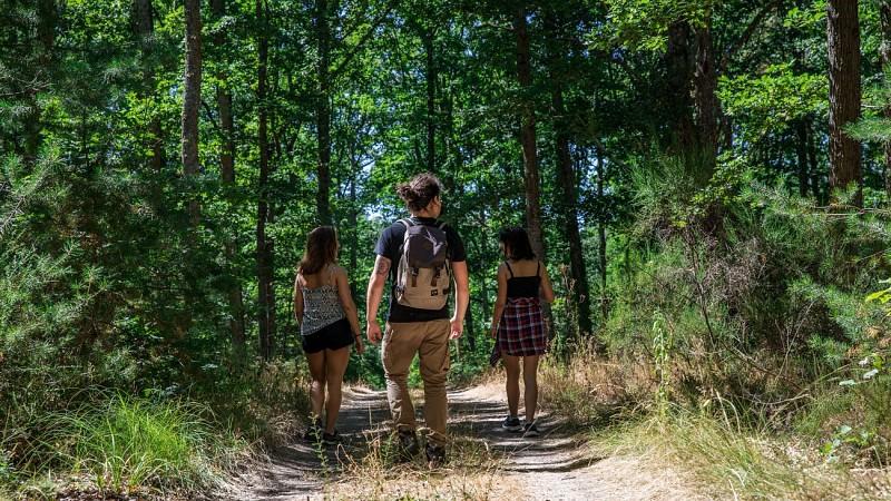 Forêt de Montpensier