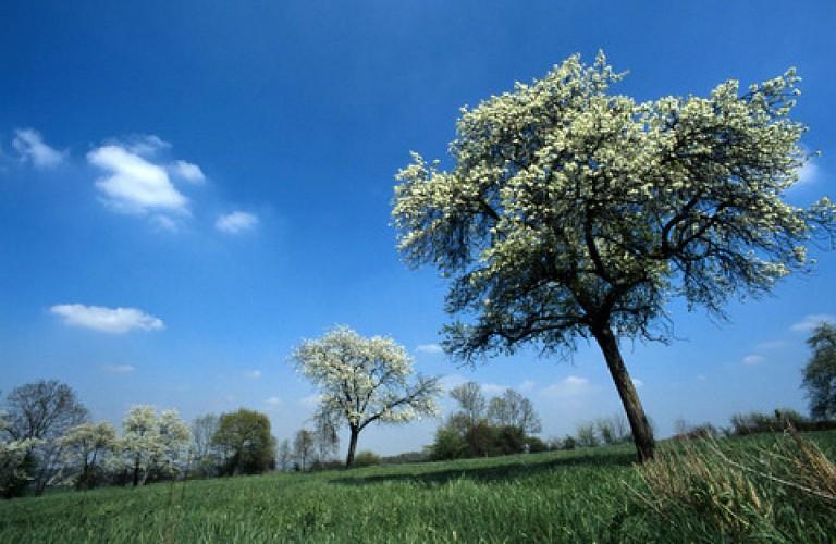 Die Apfelbaum- Tour im Pays des Vergers