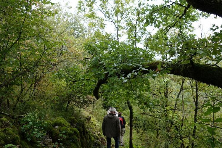 Sentier de Puymège - Queyssac-les-Vignes
