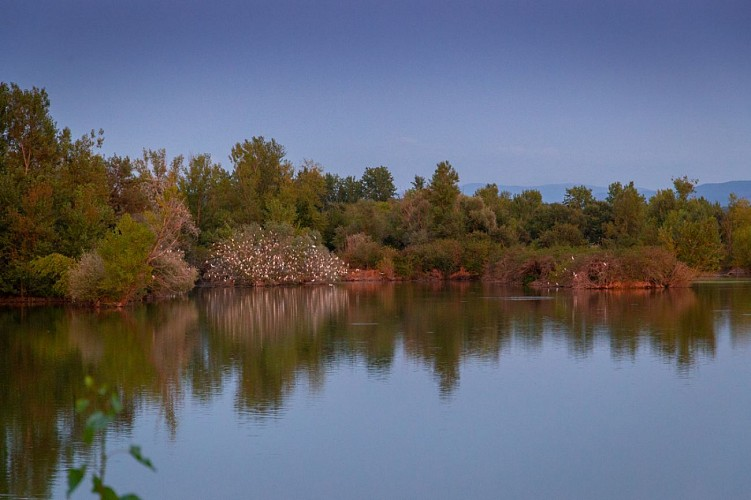 Réserve ornithologique de Cambounet-sur-le-Sor
