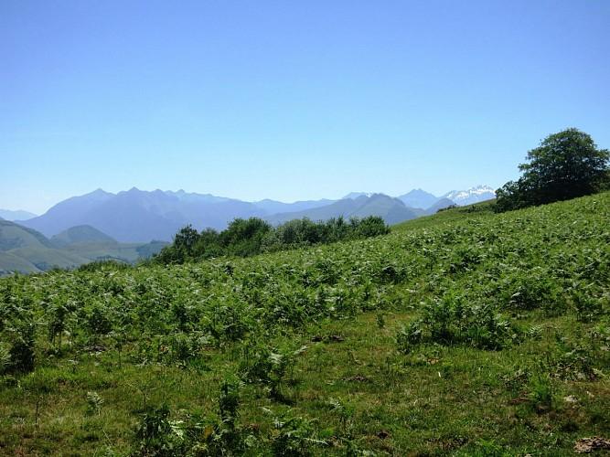 n° 7 Barétous - Bois de Gouloume