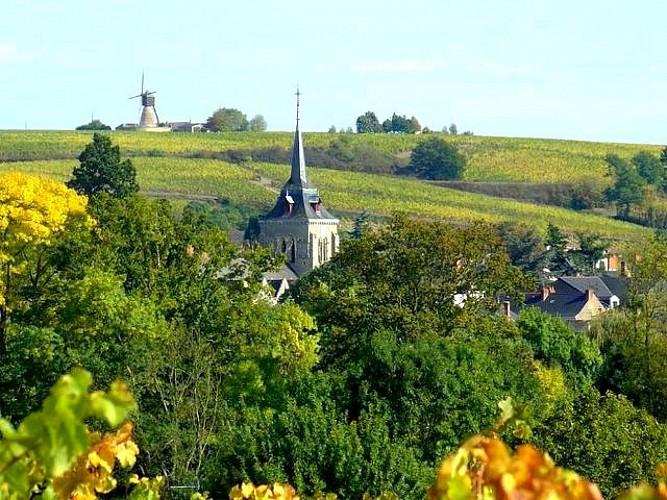 THOUARCE : Coteaux de Bonnezeaux