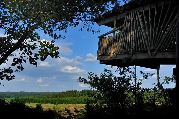 LANEUVEILLE-AU-BOIS - Het eindeloze woud