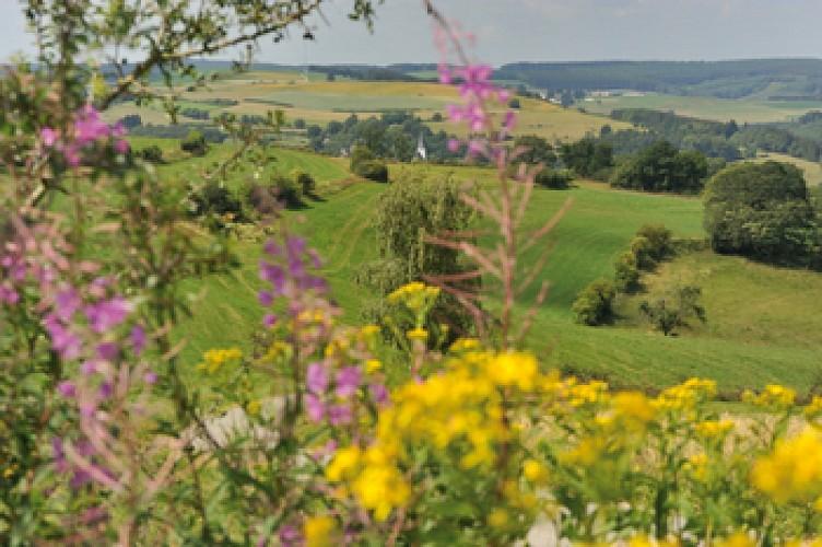 Panorama et crêtes: Burg-Reuland