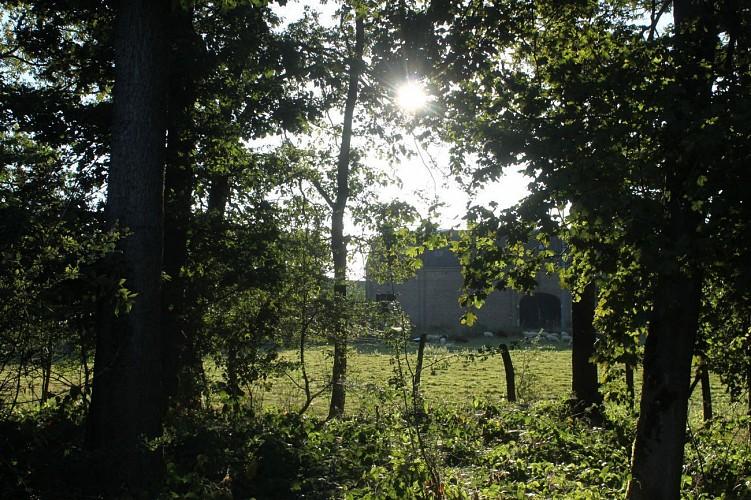 Bois d'Enneilles ( Commune DURBUY )