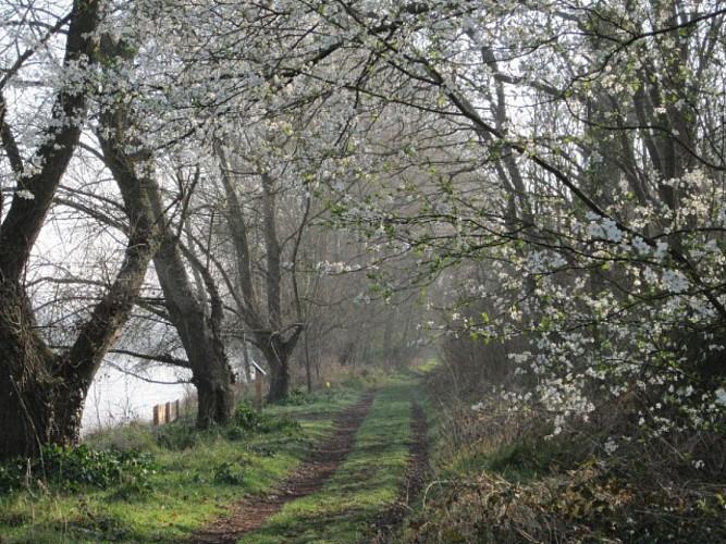 """Chemin en bord de Loire, sur le """"Sentier pédagogique des Isles"""" à Mareaua-aux-Prés"""