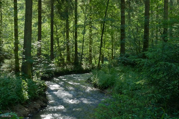 Au fil de l'eau: Montenau