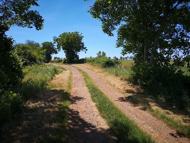 N°13 : Au fil de l'Indre au départ de Montgivray