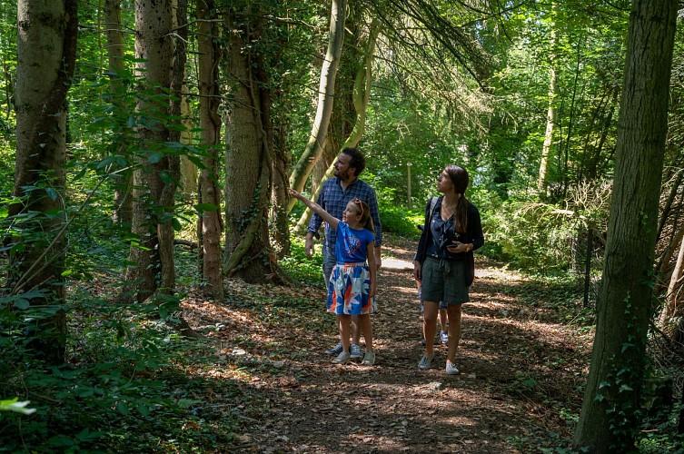 Balade en famille dans les bois