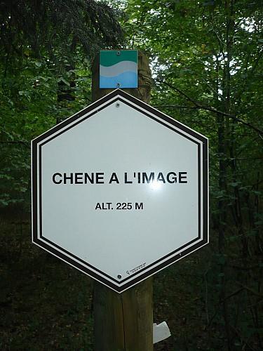 Le Chêne à l'image (Commune DURBUY)