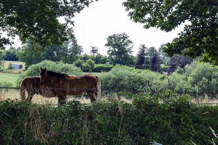 LANDIVY - Sentier des ruines de l'Abbaye