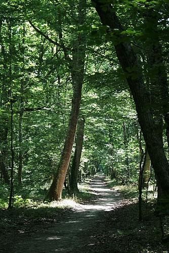 Circuit de la forêt d'Agre