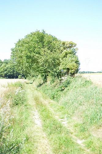 Sentier du Pigeonnier