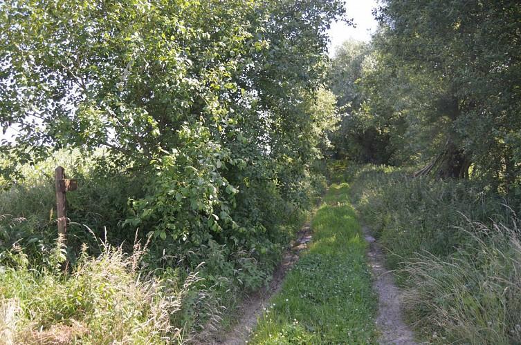 Sentier de la Longue Borne