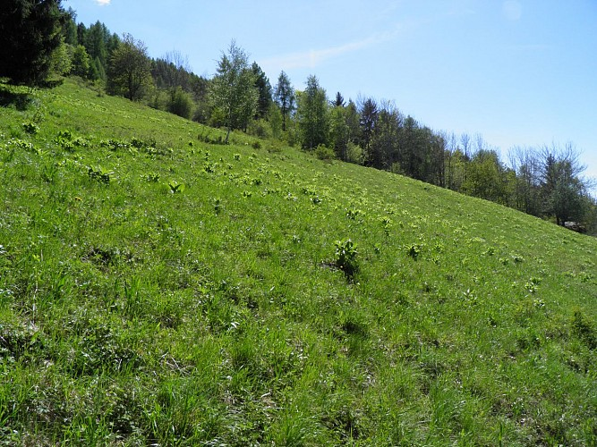 Hiking route: The Chemin de la Pierra