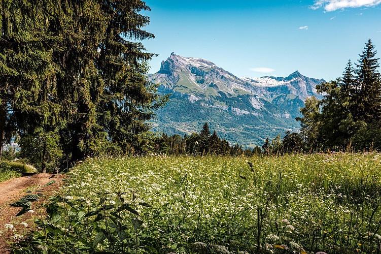 Alpages de Prapacot et de Planset