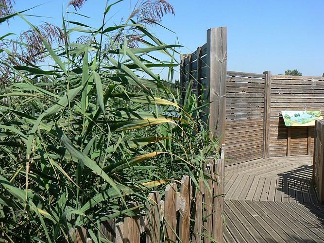 Boucle de l'étang David - Sentiers des Bord de Loire