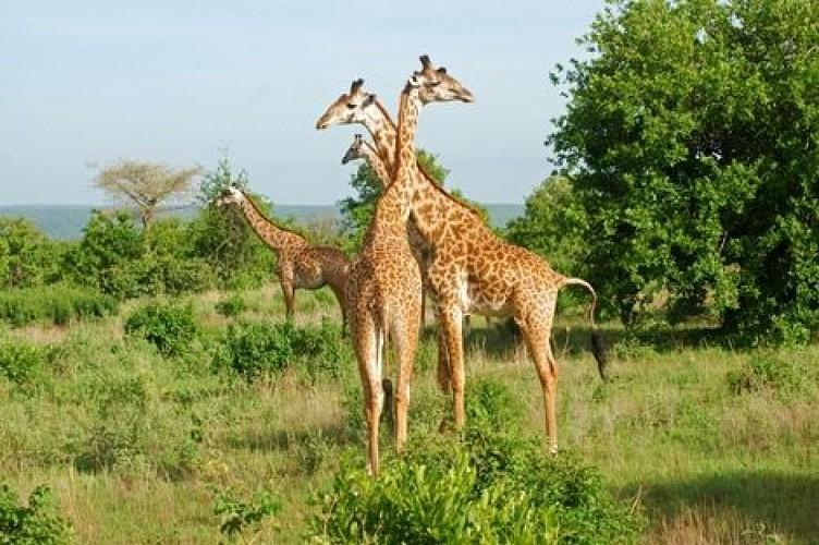 """Circuit Safari """"Esprit de Tanzanie"""" - 1 semaine"""