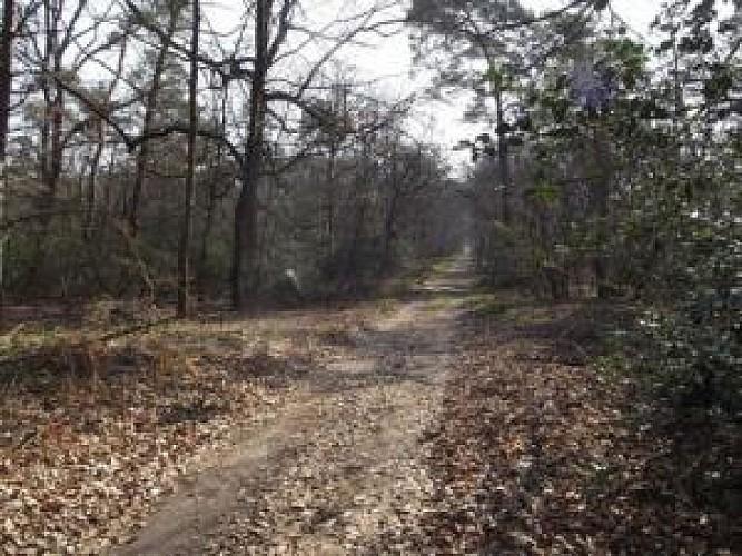 Forêt de Fontainebleau : réserve biologique - AudioGuide