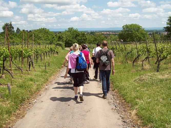 A la découverte du vignoble de Molsheim