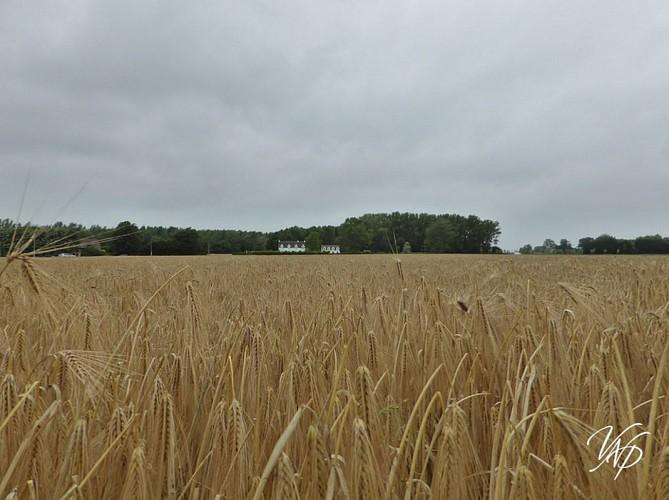 Marche Adeps Casteau 20km