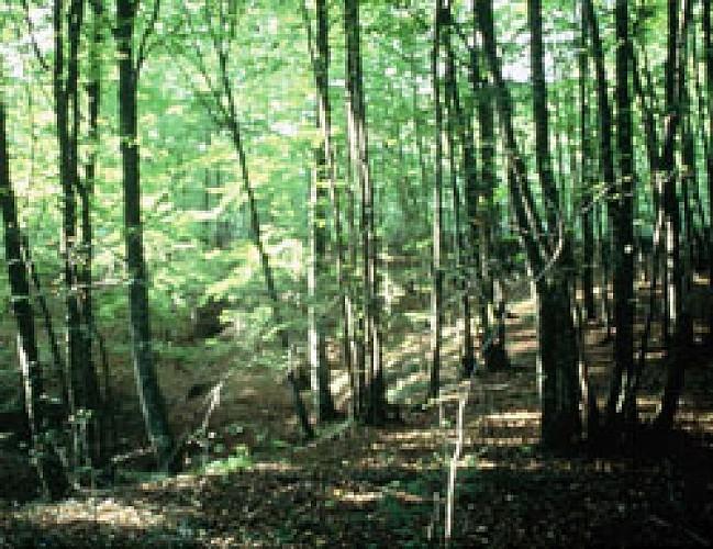 Les bois de la forêt d'Argonne