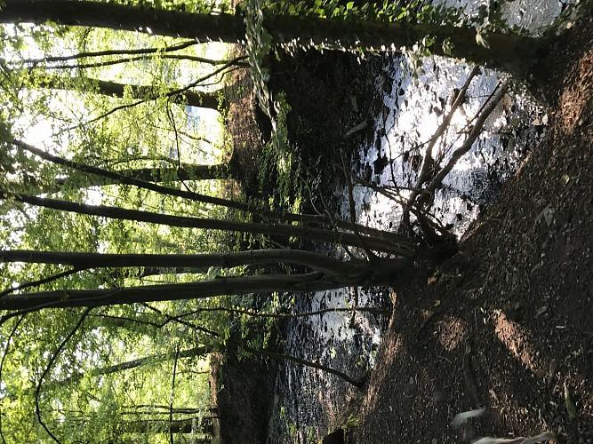 Bois du val et de la vecquée